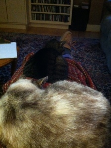 A demonstration of 3 of the warming techniques mentioned--blanket, cozy slipper and cats.